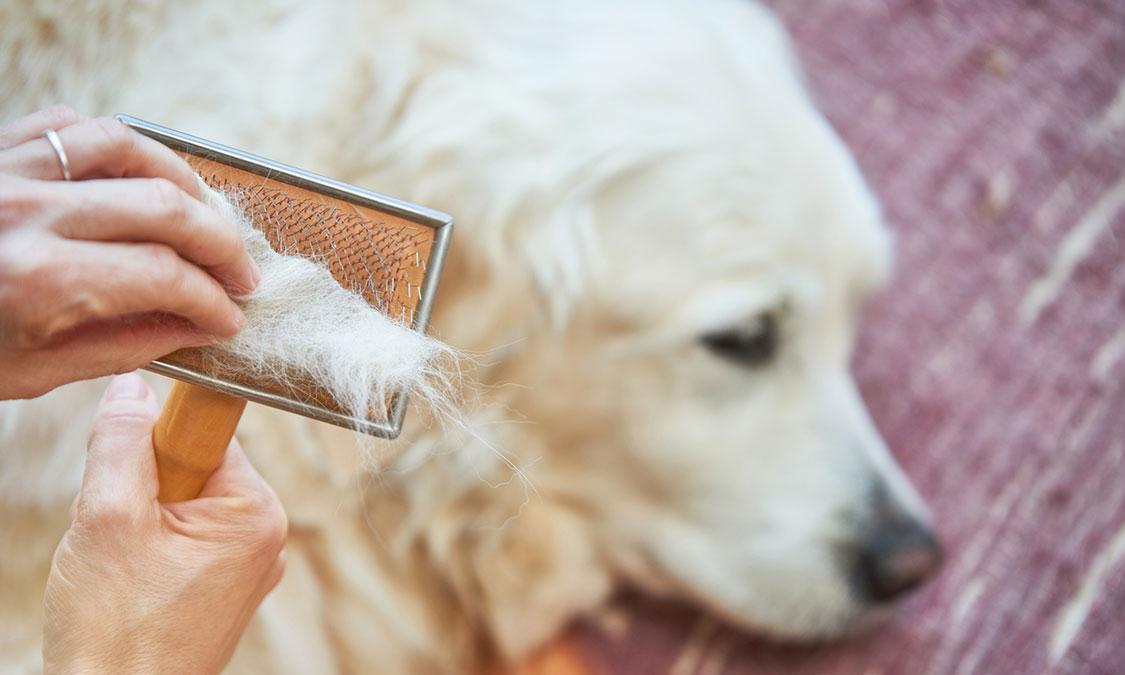 장마철 반려견 피부 관리 ! 강아지 피부 고민 끝!