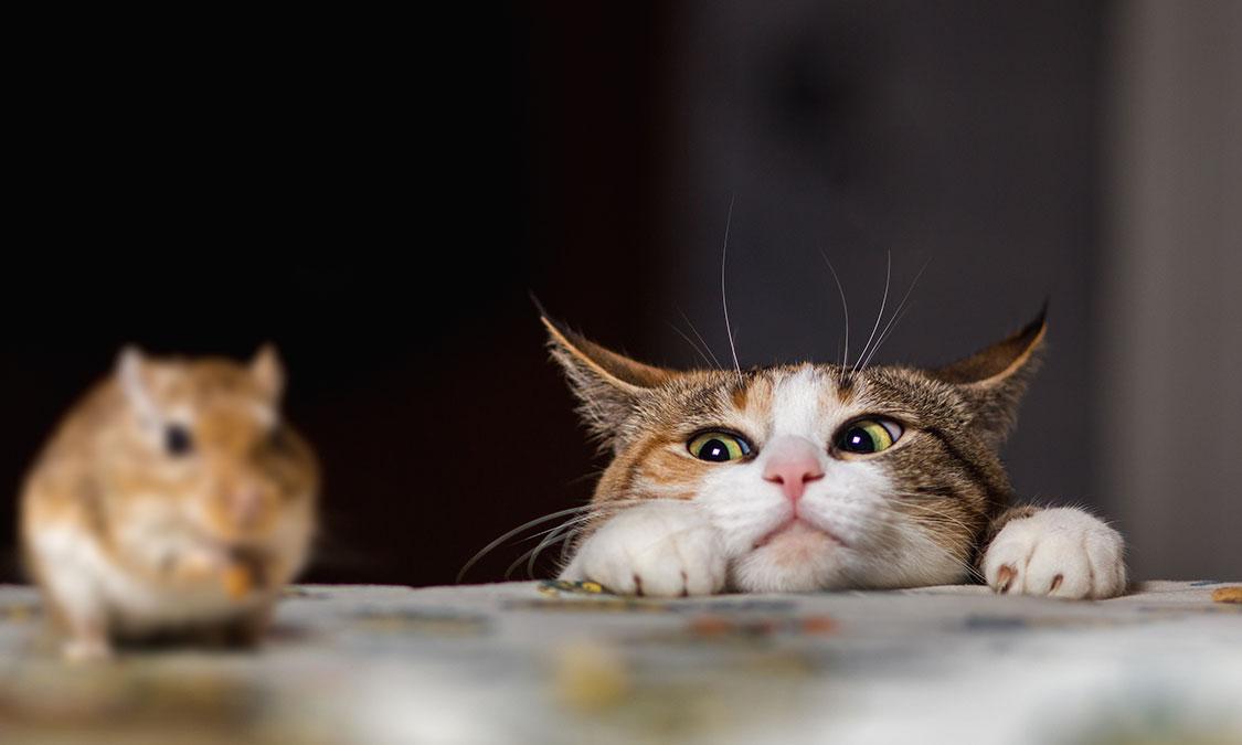 고양이를 언제부터 사람과 살게 되었을까요? 고양이를 사랑하게 된 역사!