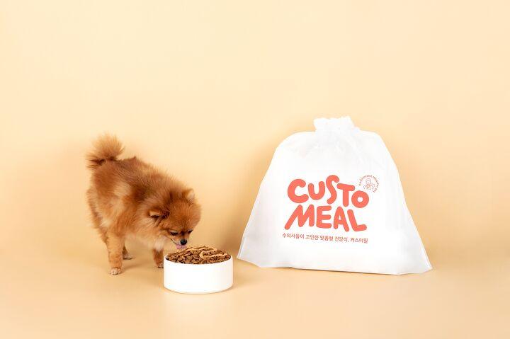강아지 사료 교체, 그냥 급여하시나요? 강아지 사료 종류 바꿀 때 주의 사항! (펫닥이 알려주는 사료 교체 가이드!)