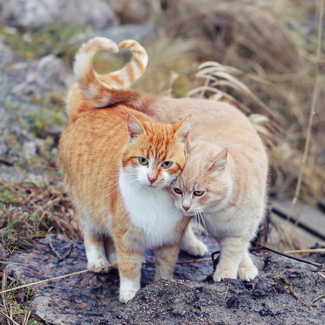 고양이의 다양한 의사소통법