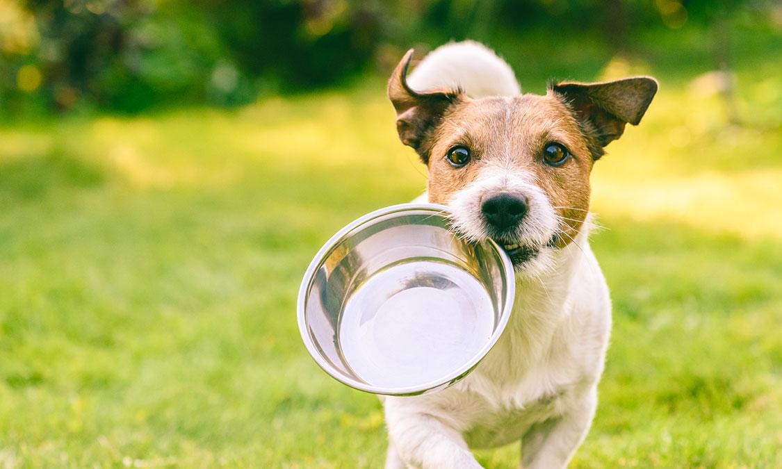 하늘은 높고 강아지는 살찐다? 강아지 가을맞이 다이어트 방법!