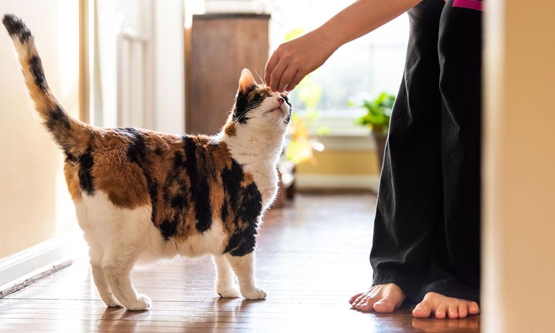 신장이 안 좋은 고양이가 지켜야 할 것! 고양이가 물은 안 마신다구요?