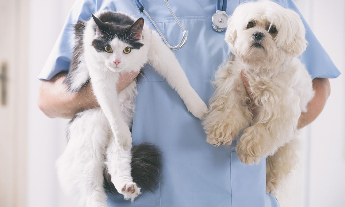 반려동물 건강검진 종류 및 건강검진으로 알 수 있는 질병
