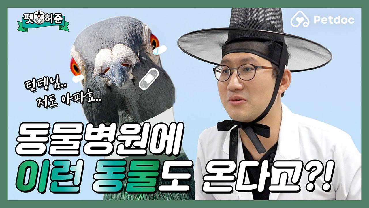 닭.. 둘기?.. 동물병원에서 특이한 동물들 만난썰 I 펫허준 ep.48