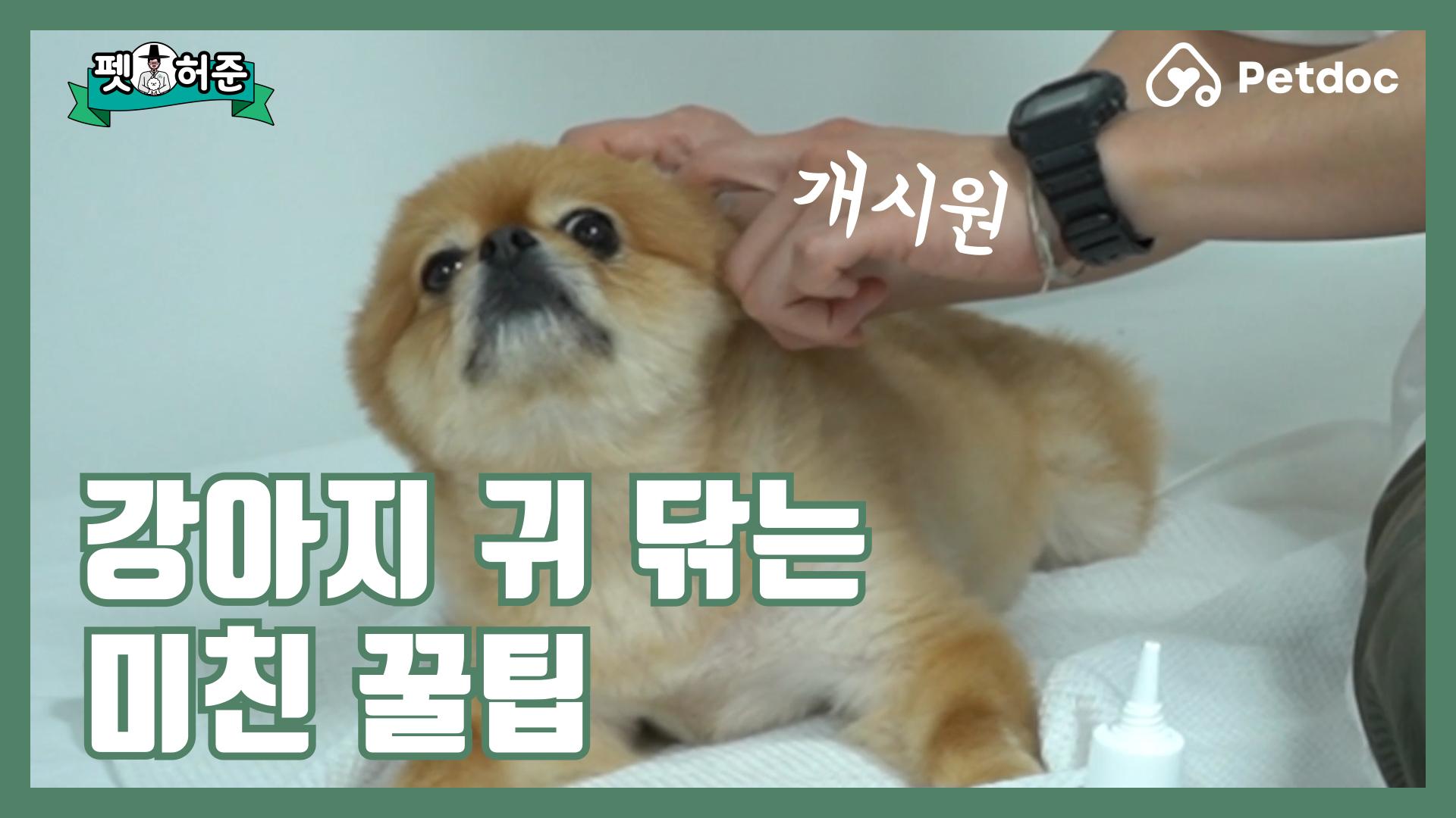 강아지 귀 닦는 미친 꿀팁I 펫허준 ep.32