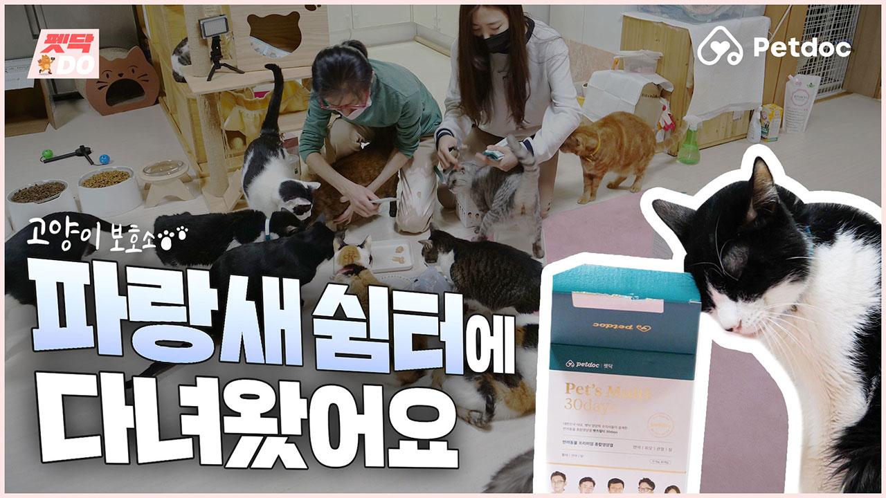 [펫닥DO] 고양이 유기묘 보호소 🐦파랑새 쉼터에 다녀왔어요!