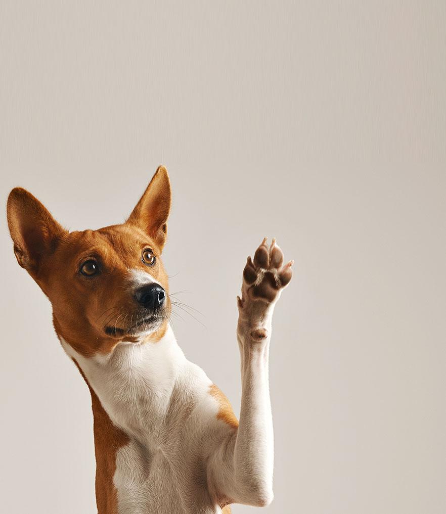 강아지 행동 언어