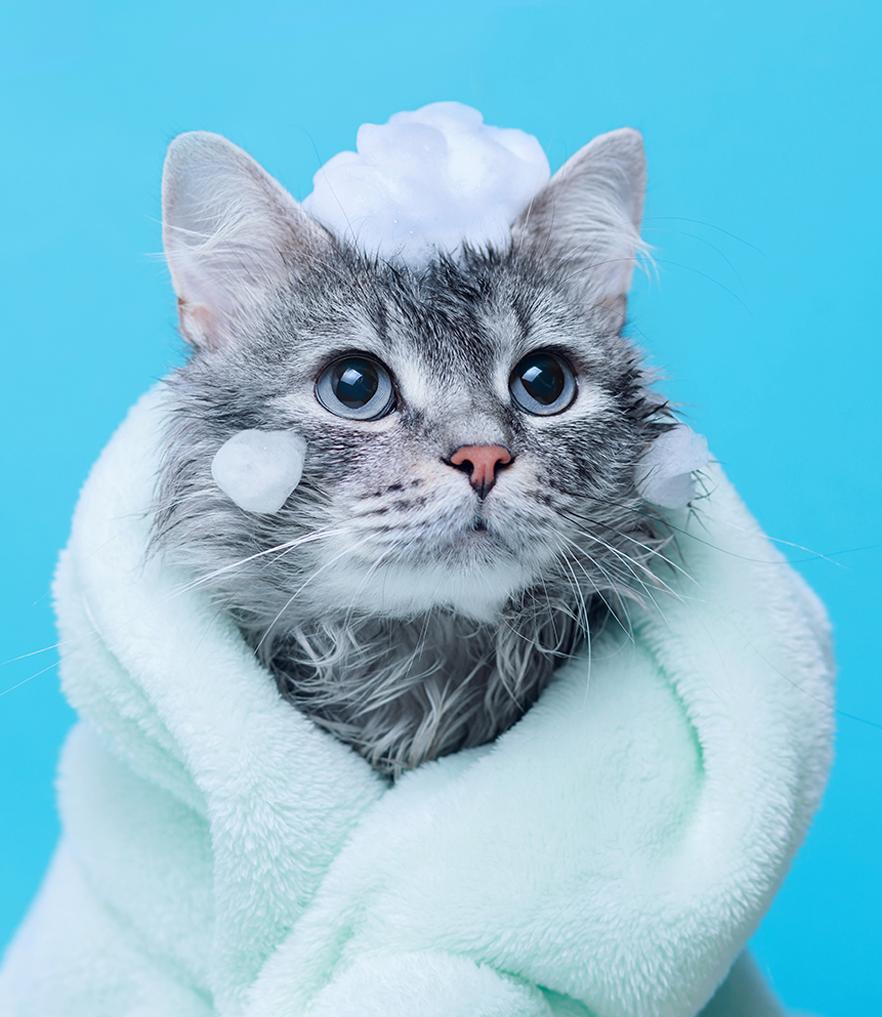 우리 아깽이 목욕은 언제부터?