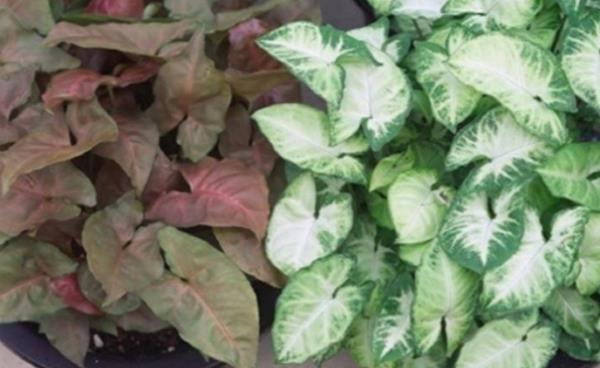 미세먼지 제거에 탁월한 실내공기 정화 식물