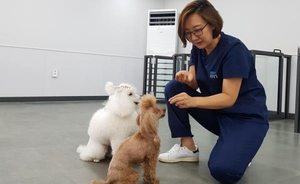 반려동물 행동치료 - 잘키움행동치료동물병원