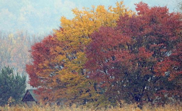 안산 곳곳에 물든 가을