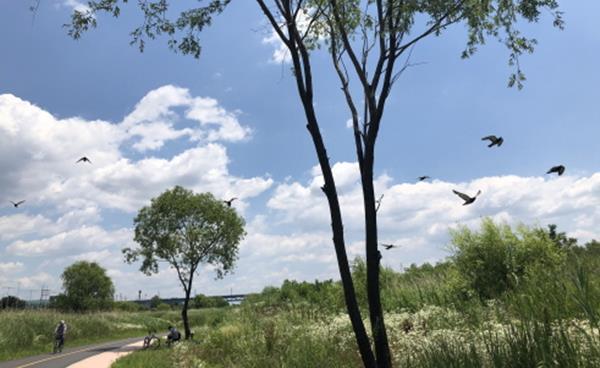 인적 드문 산책길 나들이 '헤이리 노을숲길', '고양대덕생태공원'
