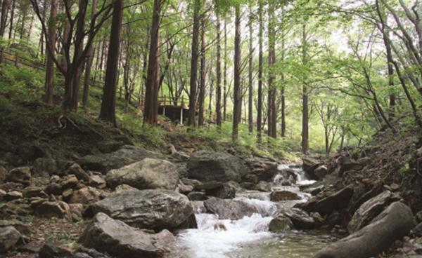 산림욕 즐기기 좋은 안양지역 명산 소개!