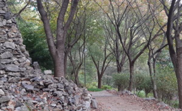 가을에는 걷자! 테마가 있는 걷기 좋은 길