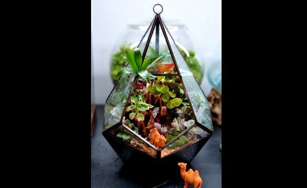 유리그릇 안의 작은 정원 꾸미기, 일산 '스토리인가든'에서 배워보세요