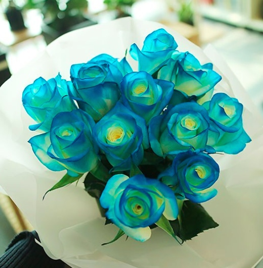 Blue Roses in Korea