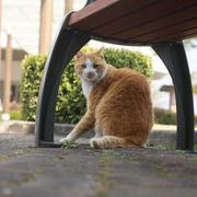 양평 고양이