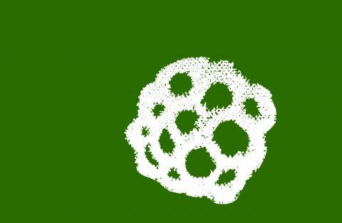 seed1