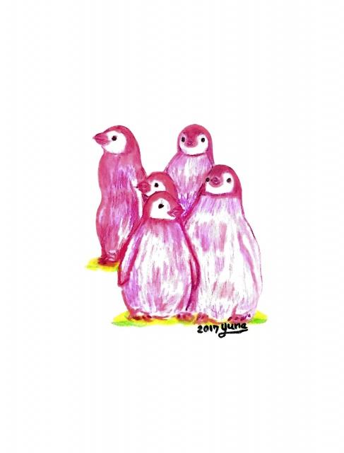 오로라펭귄_Pink Penguins by 펭귄스튜디오