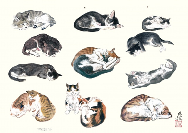 이세상고양이 by 플라네르