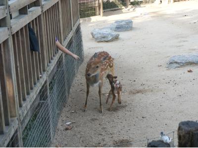 ▲ 동물원에서 동물을 관람하는 어린이들