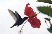 bird180120
