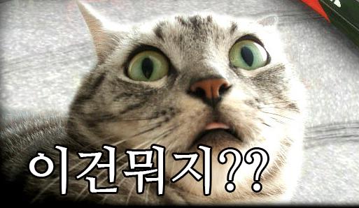 놀란표정의 고양이 사진