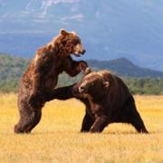 내가 곰이라니!