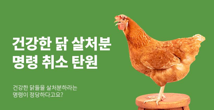 건강한 닭 살처분명령  취소 탄원