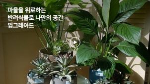 [0원강의] 마음을 위로하는 반려식물 홈가드닝으로 나만의 공간 업그레이드_브리스플랜트