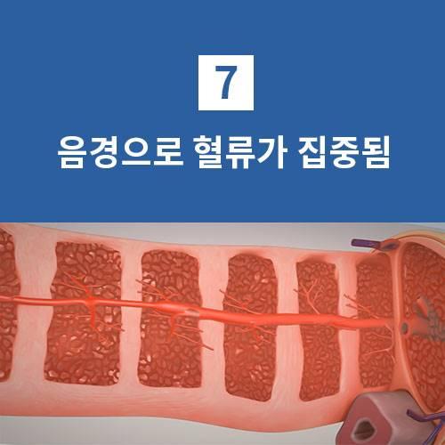 음경으로 혈류가 집중됨