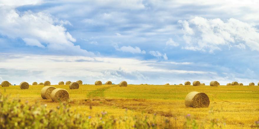 가을의 시작과 여름의 끝, 입추와 처서